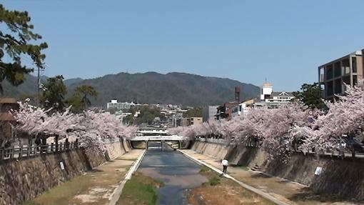 熊八橋的日本代購小站